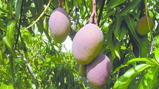 Exportações frutas 1