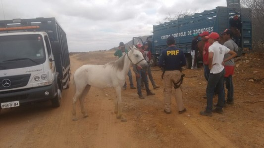 Cavalos retidos pela PRF