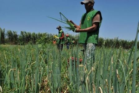 agricultura familiar_2