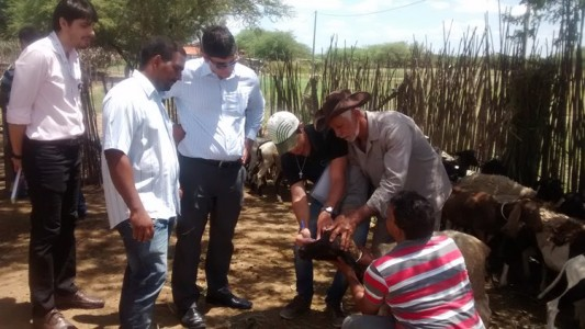 Projeto Caprinos e ovinos