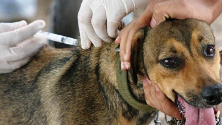 A vacina é importante para imunizar cães e gatos contra a raiva