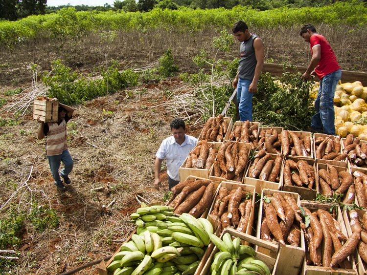 A agricultura familiar também será destaque na Fenagri 2016, através do Primeiro Encontro de Negócios, que pretende movimentar mais de R$5 milhões /Foto: divulgação