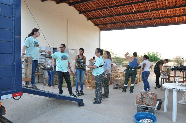 A ação seguirá até o dia sete de maio e a expectativa é de que até o término dessa 37ª operação o Cemafauna receba ainda mais mil animais/Foto:ASCOM