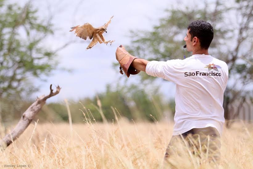 O curso apresentará com ênfase a Biologia das aves de rapina/Foto:ASCOM