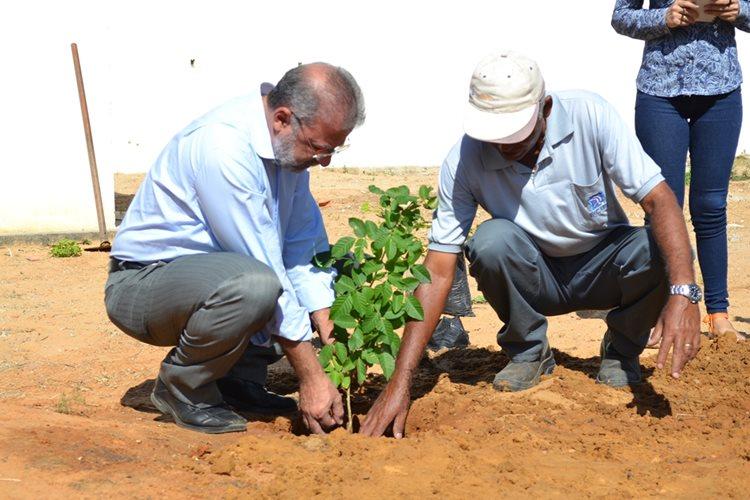 Espécies da Caatinga foram inseridas no campus da Facape/Foto:ASCOM