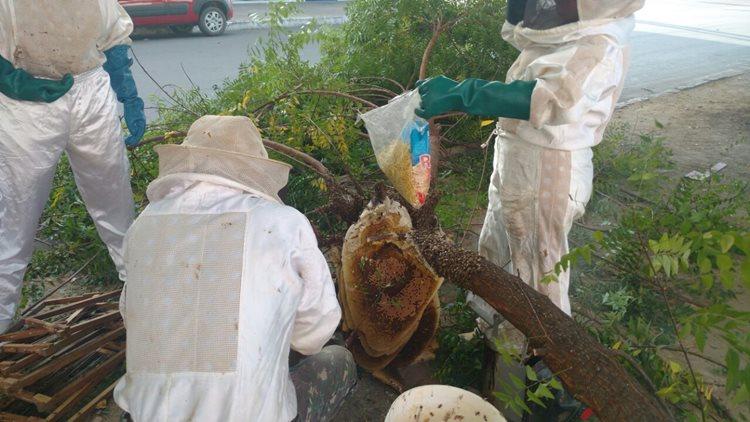 Durante a remoção das abelhas, via ficará interditada/Foto:ASCOM