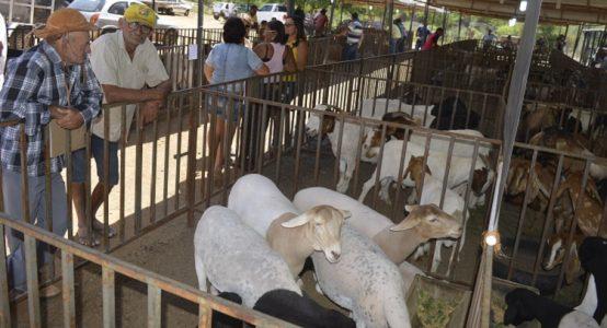 Cerca de quatro mil pessoas prestigiaram o momento que reuniu 50 expositores e um total de 500 animais./ Foto: ascom
