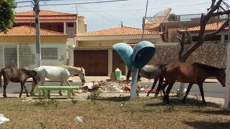 lixo-casa-nova-01-cavalos